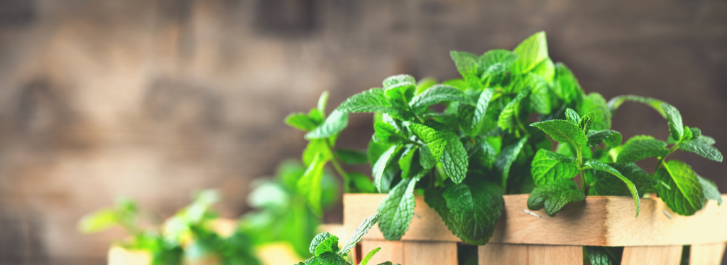 Our Favorite Herbs To Use In The Summertime