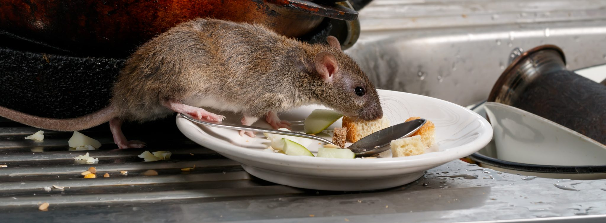 Pest Prevention from a Restaurant Insider – What Could You Be Doing Differently?